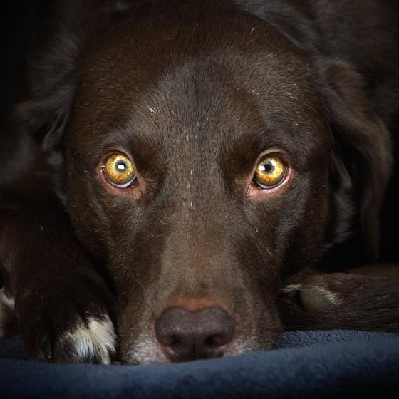 Boonty the Dog - Photographe officiel de l'élevage
